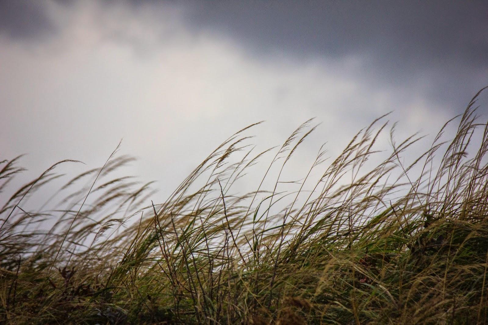 Очень крепкий ветер ждёт жителей Тверской области