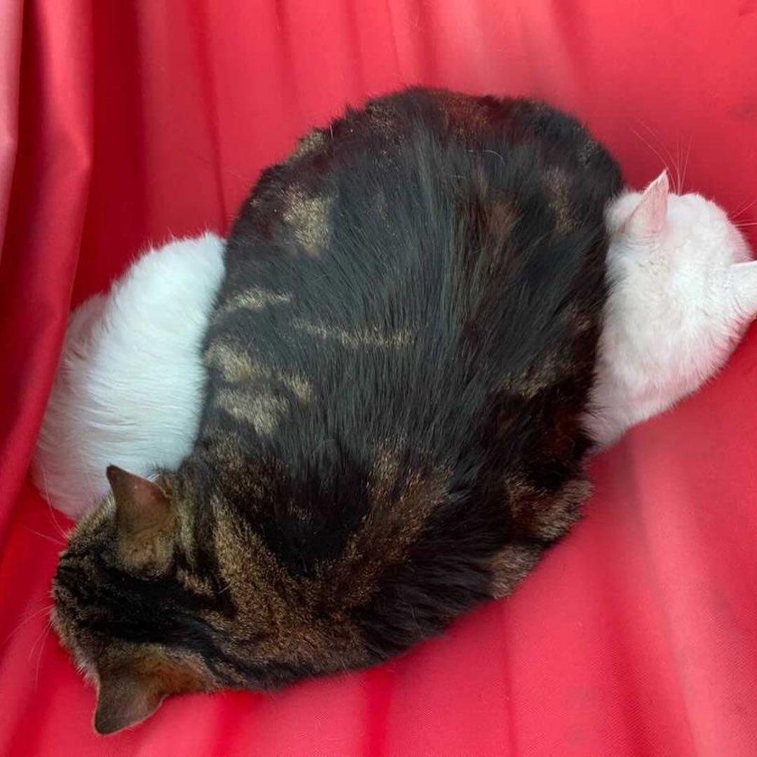 Двух котов в мешке оставили умирать в тверском лесу