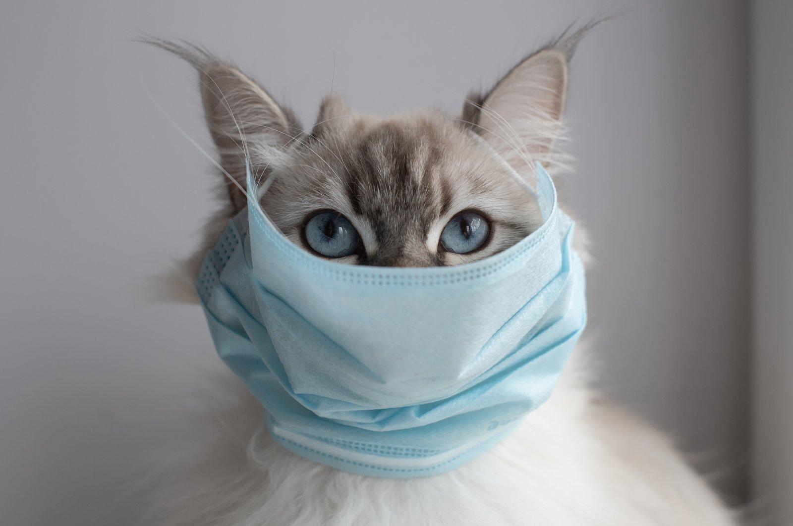 За сутки больше 80 человек заболели коронавирусом в Тверской области