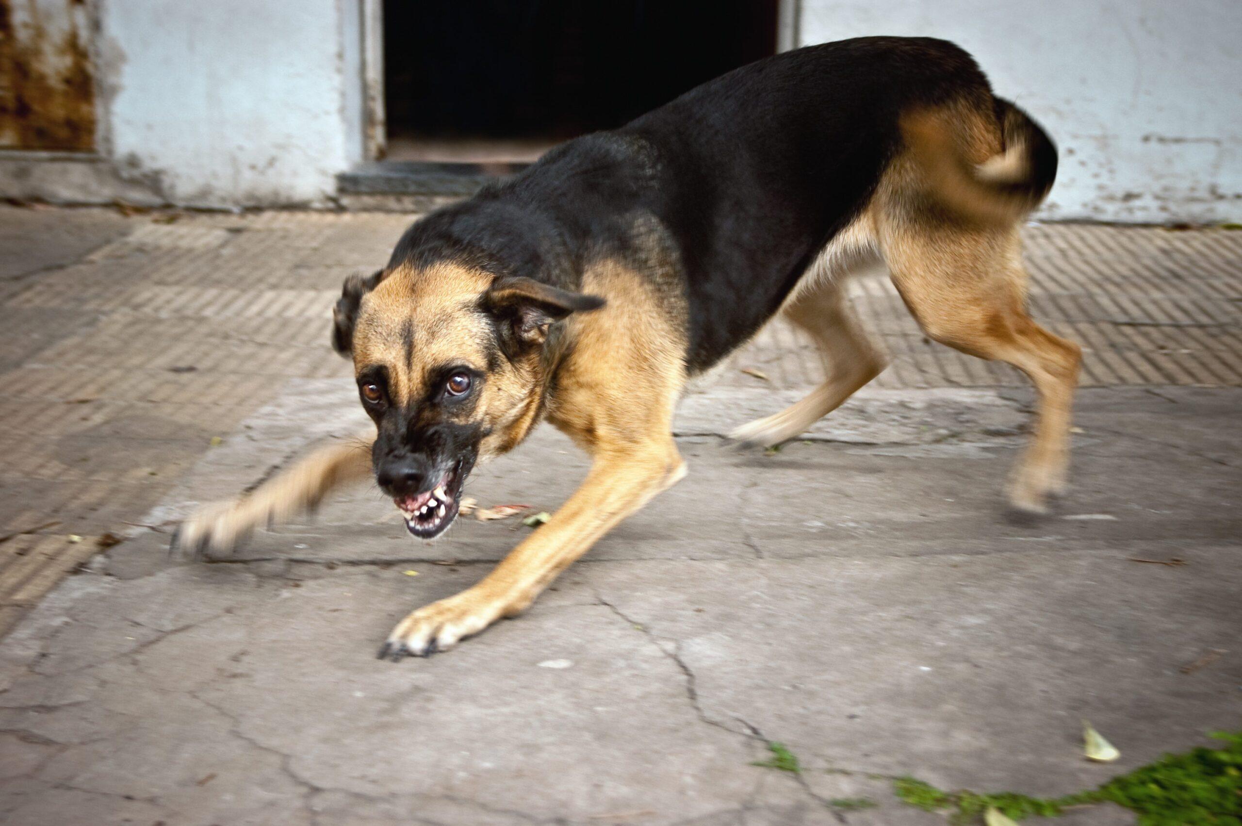 В Тверской области больная бешенством собака заразила своих хозяев