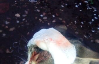 В Тверской области живодёры охотятся на кошек с пневматическим оружием
