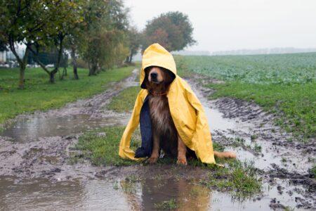 """Грозы и """"парилка"""": тверские синоптики рассказали о погоде на выходных"""