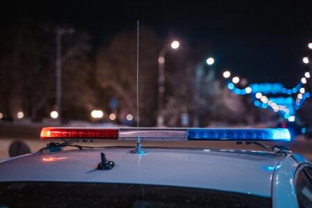 Ночью на трассе М-10 в Тверской области столкнулись лось и «Ауди»