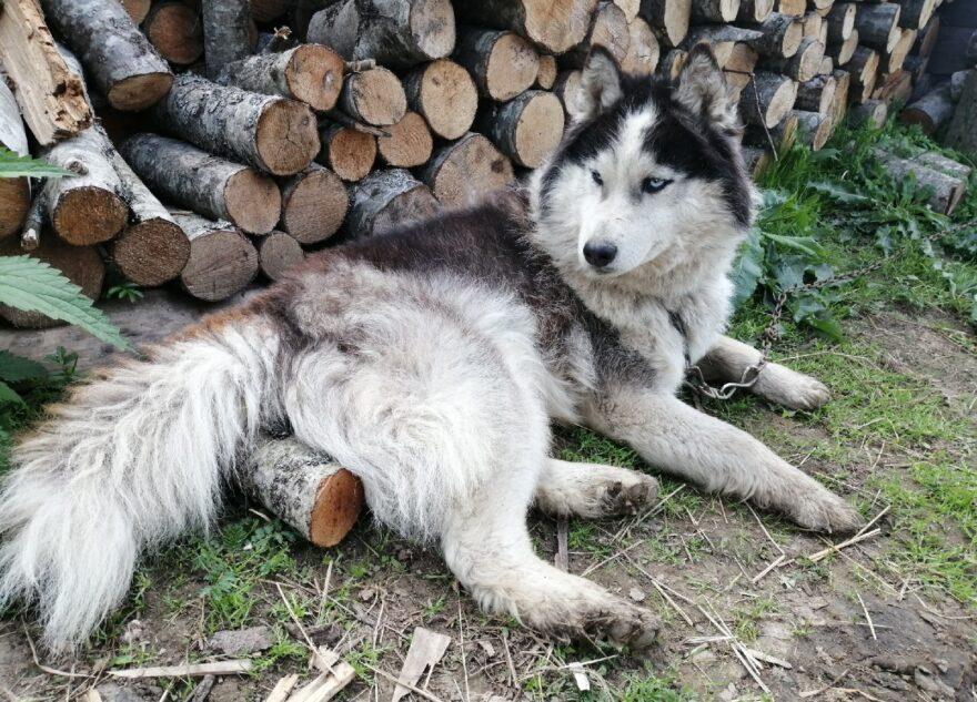 В Тверской области пёс пробежал больше 20 километров в поисках хозяев