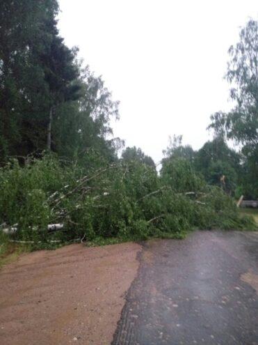 Ураган в Тверской области валит деревья и оставляет людей без света