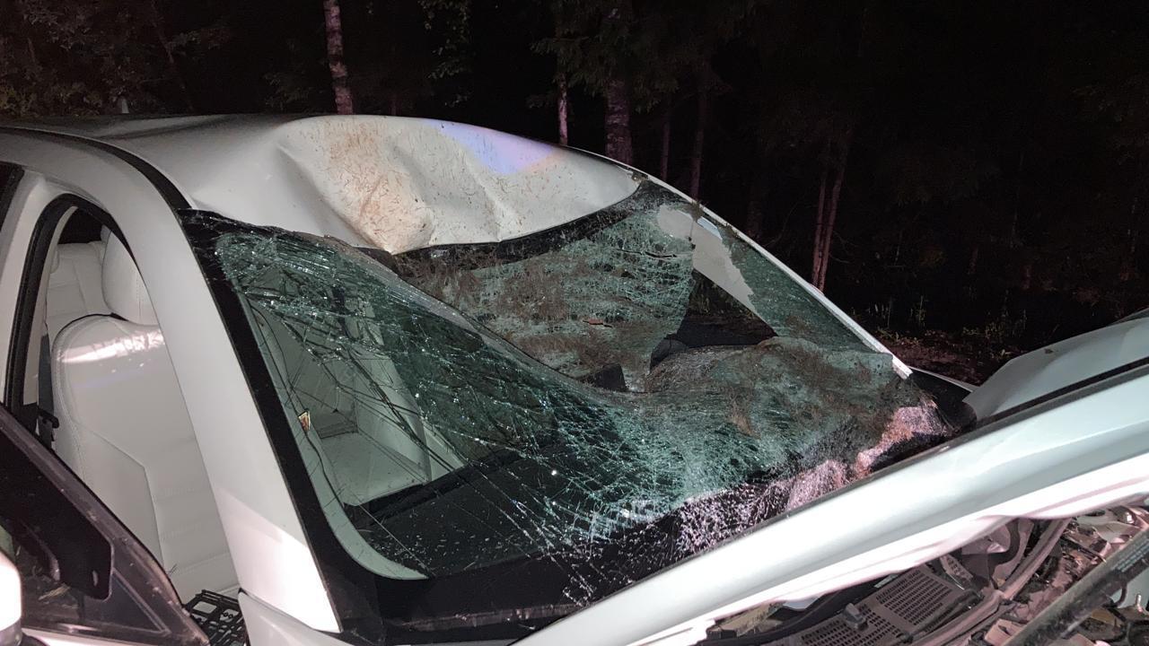 Двое водителей не смогли избежать столкновения с лосями в Тверской области