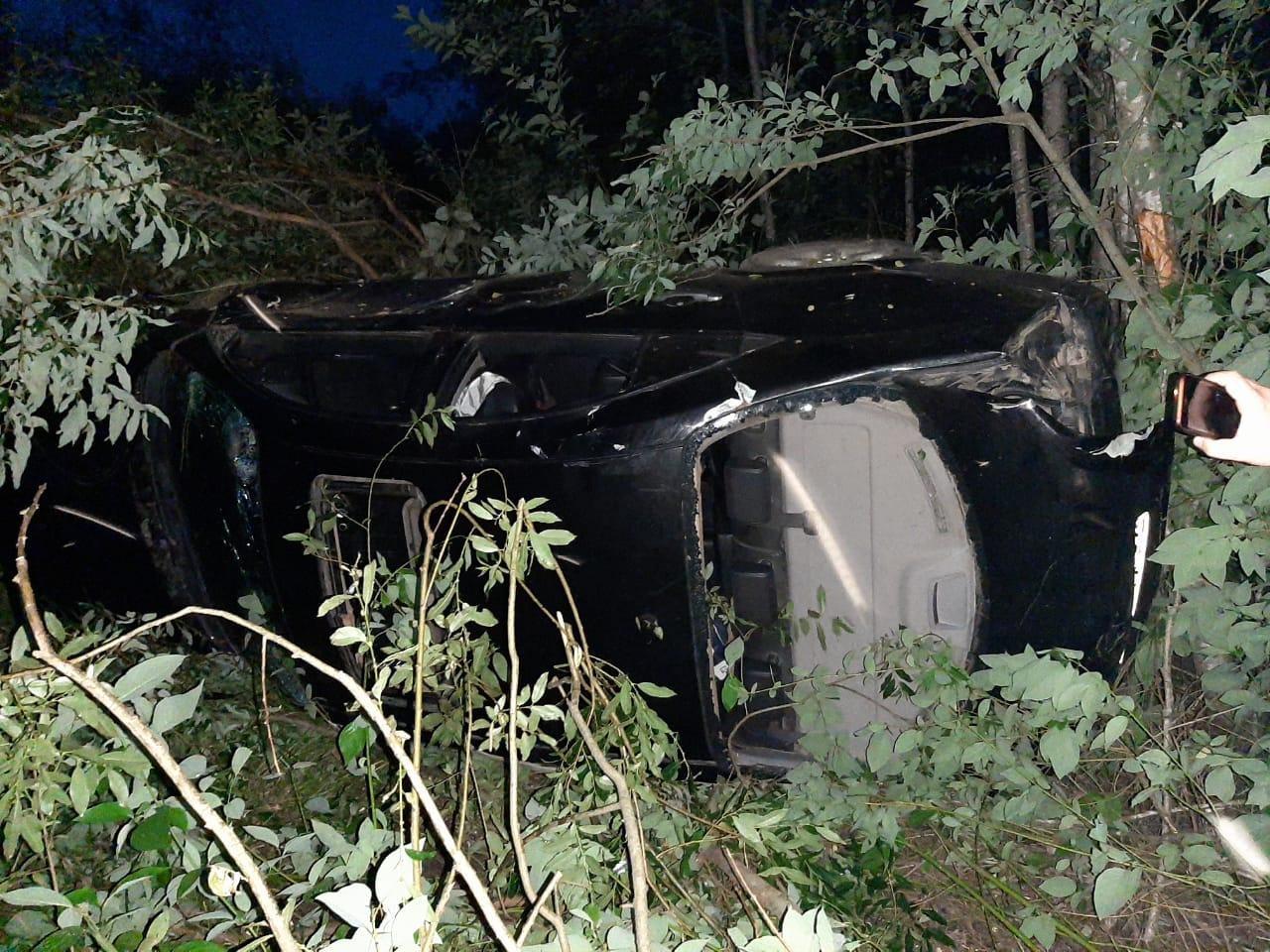 В Тверской области столкнулись машина и лось: три человека пострадали