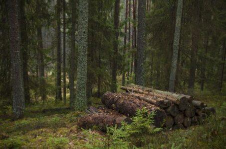 Мошенники покупали в Тверской области лес под видом полей