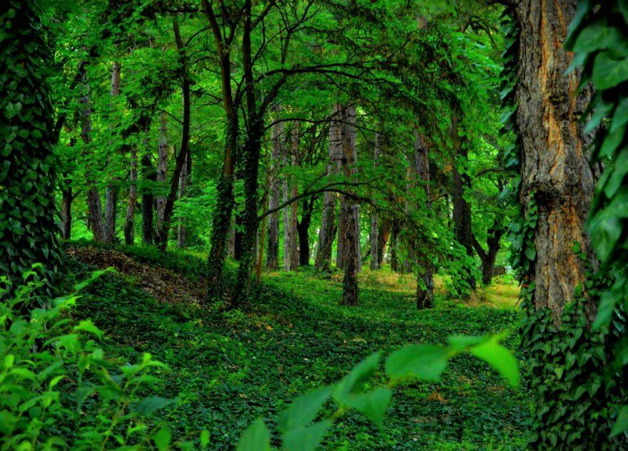 Экоактивисты Тверской области могут выиграть международную премию Eco World