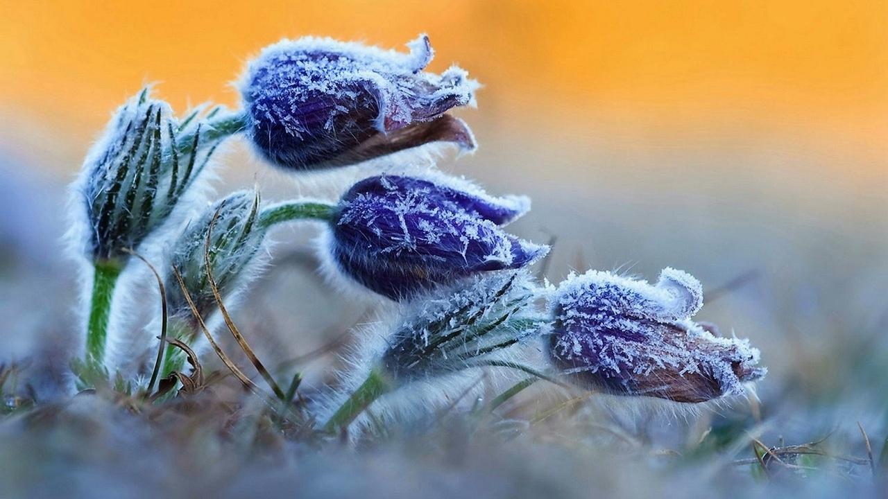 Синоптики рассказали, сколько еще продлятся ночные заморозки в Тверской области