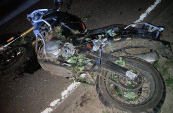 Мотоциклист погиб в Тверской области после столкновения с лосем