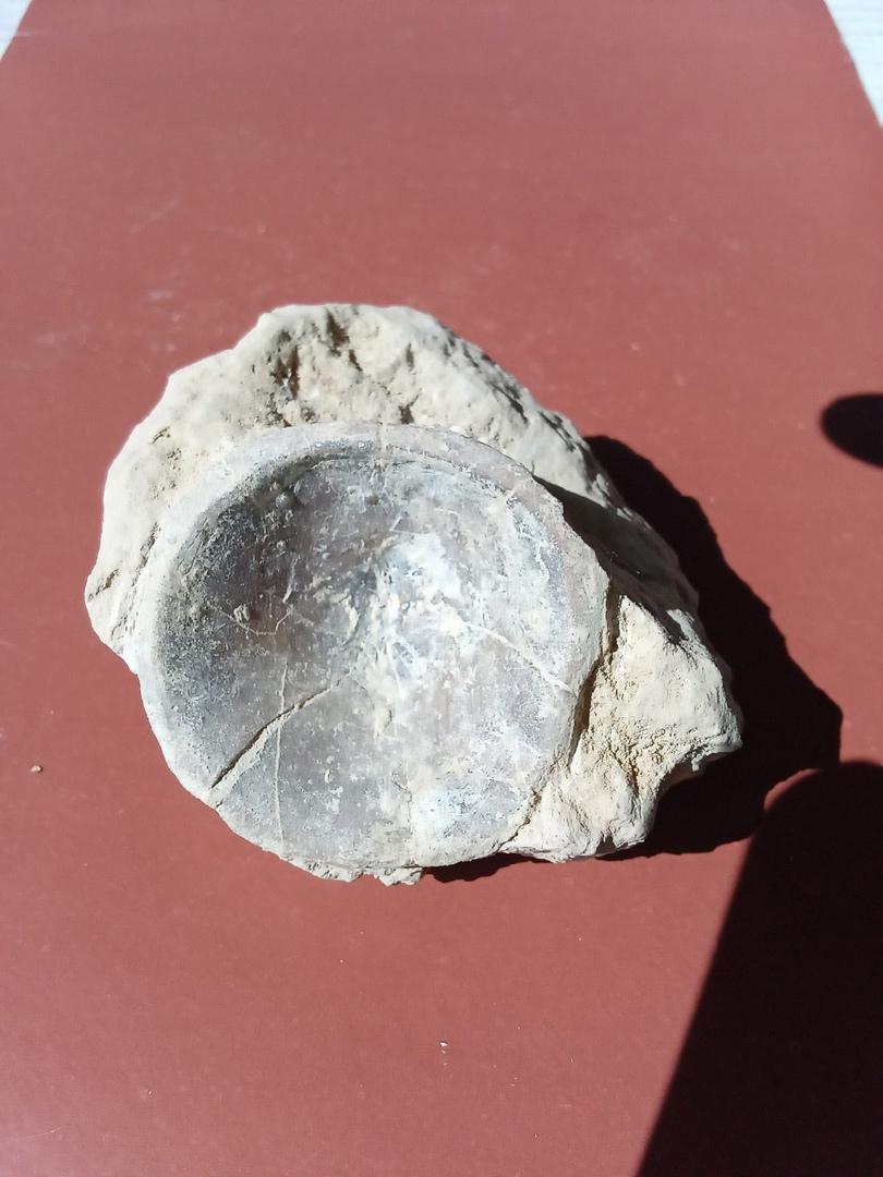 В Тверской области нашли загадочную окаменелость, которой почти полмиллиарда лет