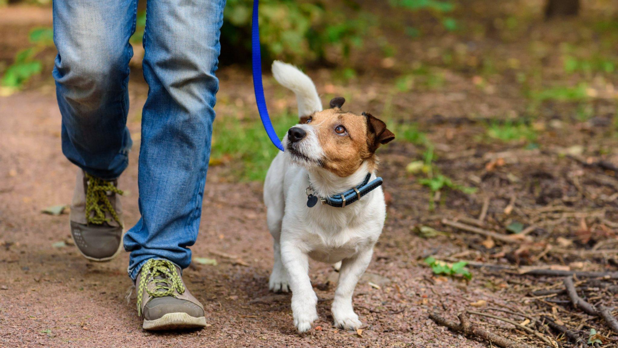 Детям и пьяным жителям Тверской области запретят выгуливать собак