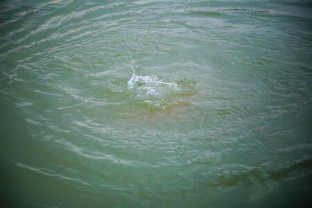 Житель Тверской области утонул в реке Кашинка