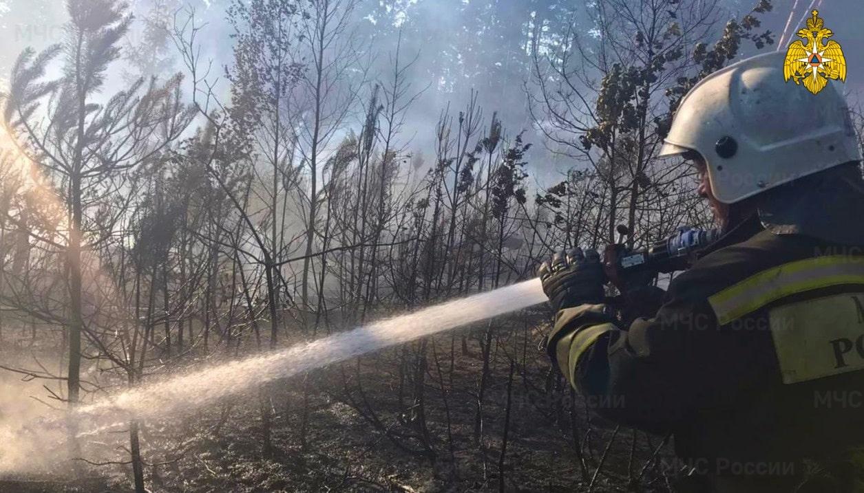 Больше 40 человек тушили лесной пожар под Тверью