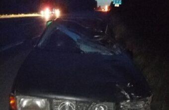 Появились фото ДТП, где столкнулись «Ауди» и лось в Тверской области