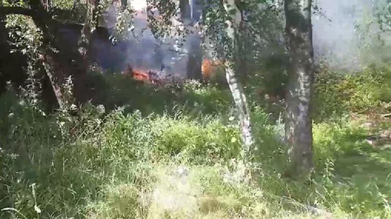 Из-за горящего мусора в деревне под Тверью чуть не начался массовый пожар