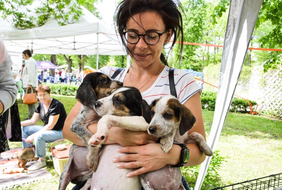 Догнадзор: тверские власти и зоозащитники нашли схему решения проблемы бездомных животных