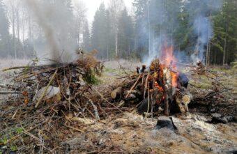 В Тверской области идут проверки в лесах, нарушителей штрафуют