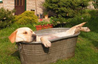 Жителям Тверской области рассказали, как помочь собаке при тепловом ударе
