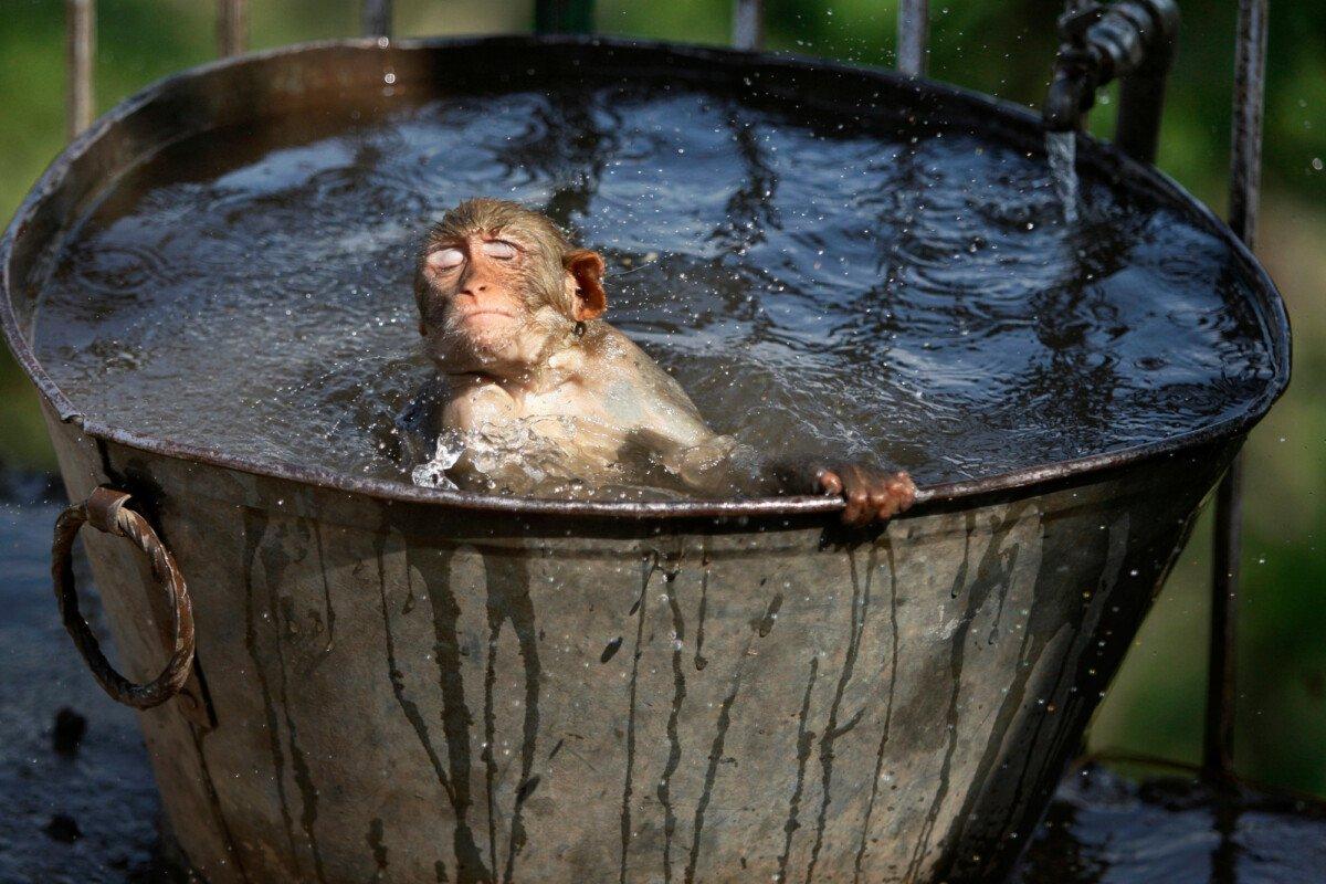 Синоптики ответили, когда в Тверской области закончится аномальная жара