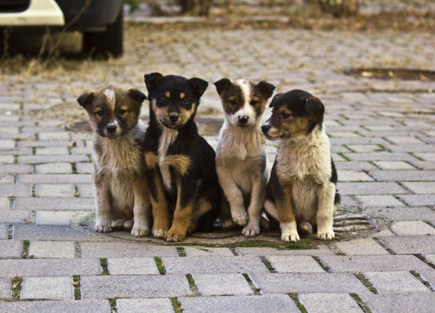 Власти Тверской области рассказали, что ждёт безнадзорных животных