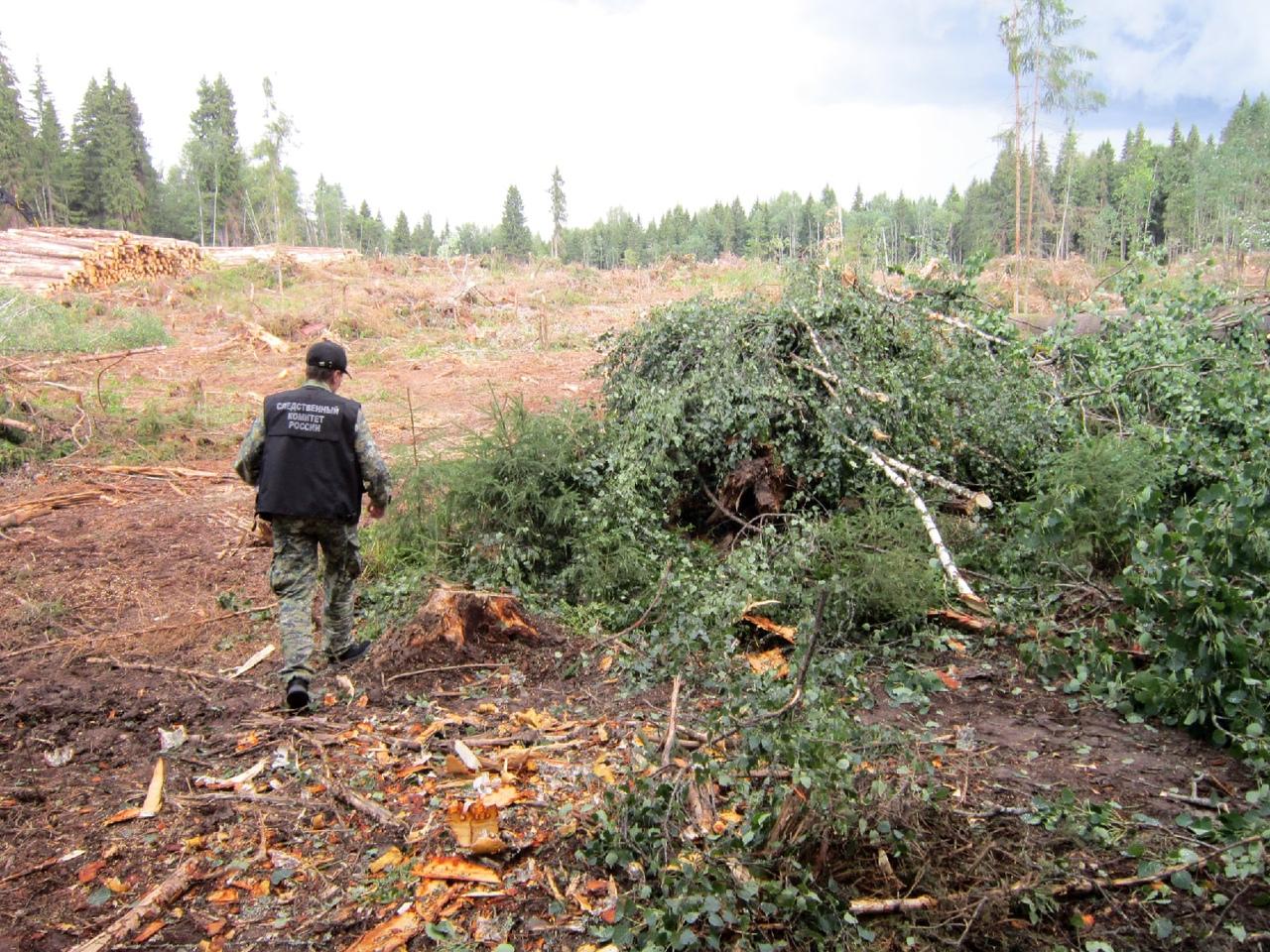 В Тверской области погиб мужчина, попавший под падающее дерево