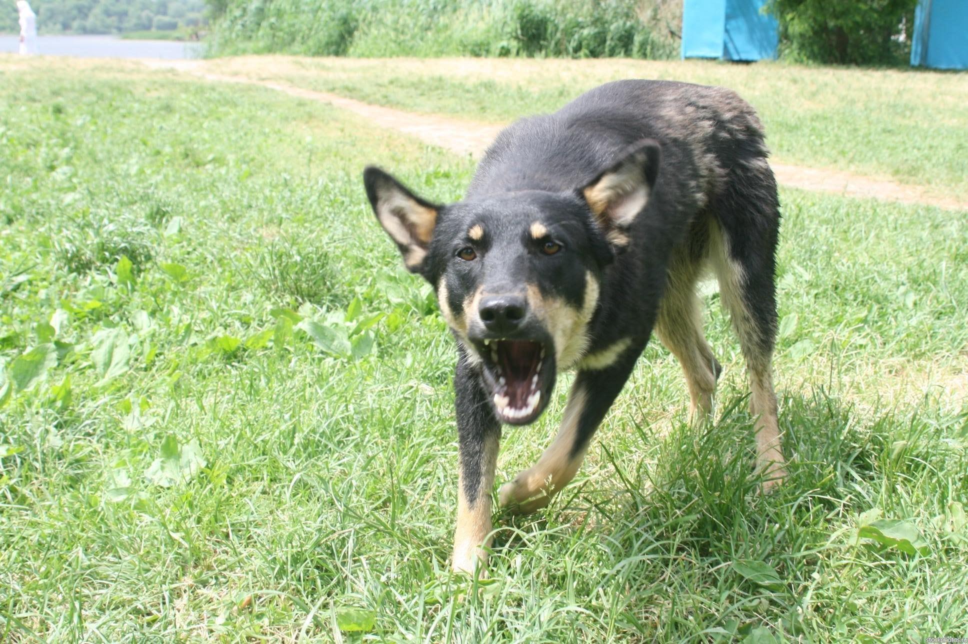 Бродячая собака набросилась на маленькую девочку в Тверской области