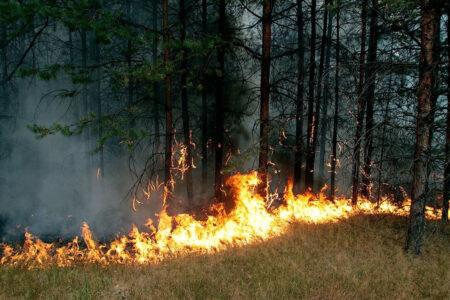 Из-за сухой погоды в Тверской области загорелся лес
