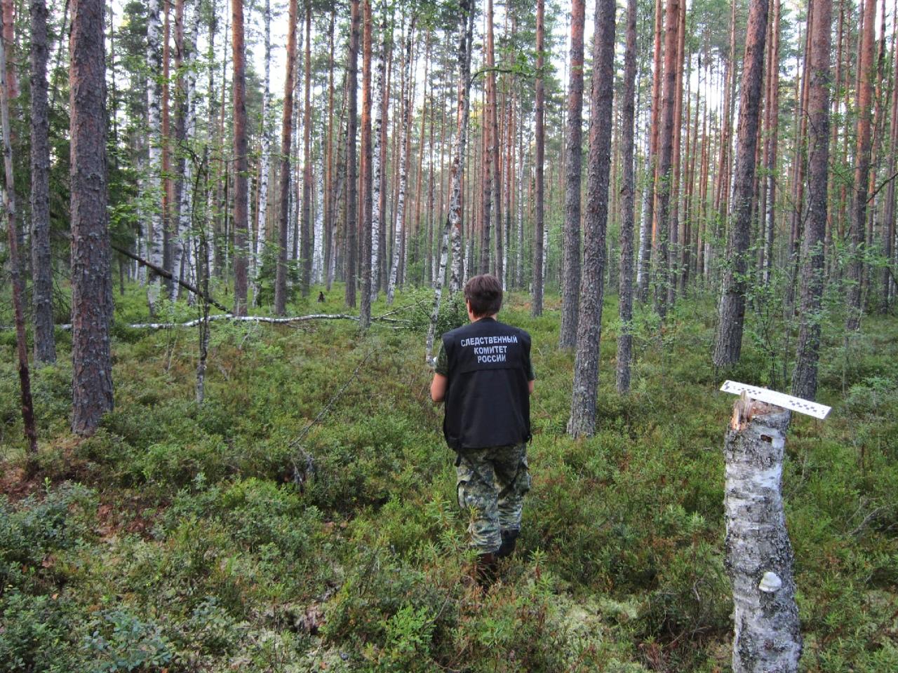 Останки женщины нашли в лесу в Тверской области