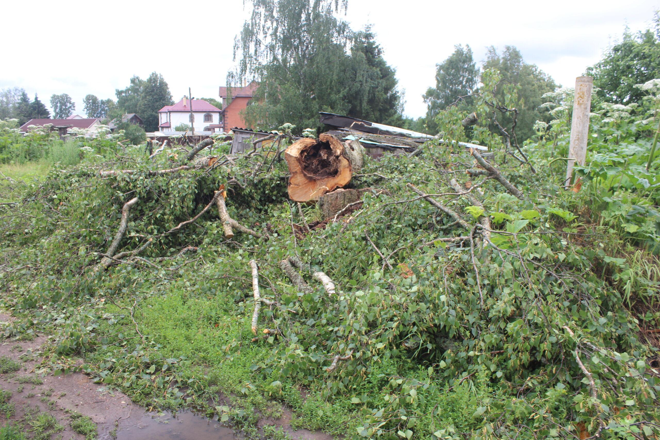 Тверские волонтеры распилили опасное дерево, о котором жители рассказали президенту