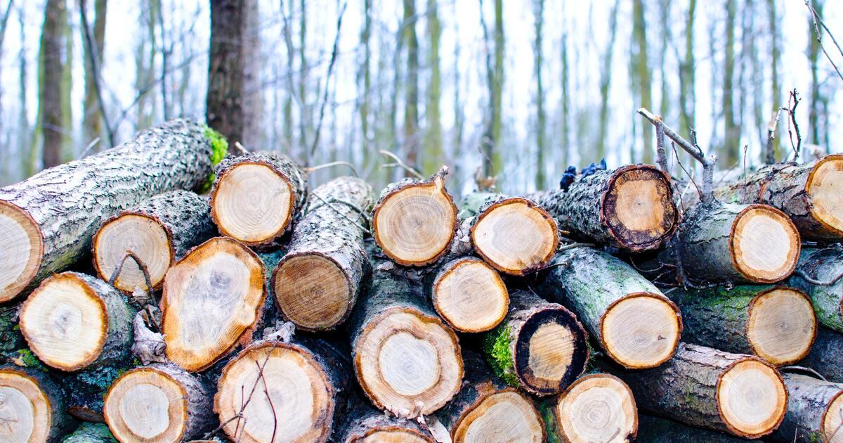 Жители Тверской области отправились в колонию из-за рубки леса на 4 миллиона