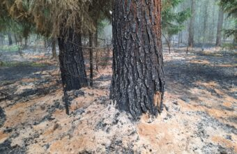 Под Тверью 50 человек до приезда пожарных пытались потушить лес