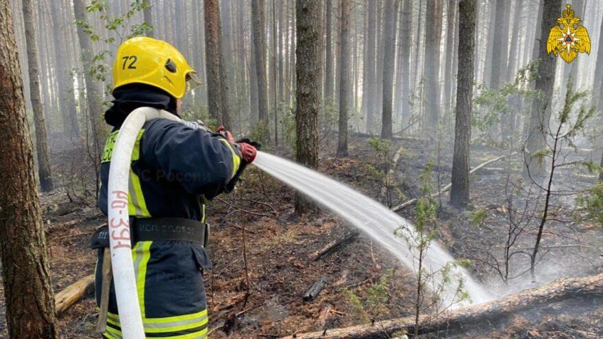 Больше 19 человек тушили лесной пожар под Тверью