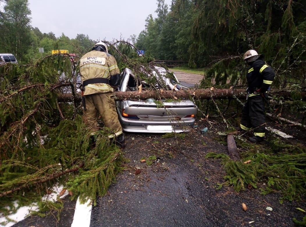 Не дошедшая до Твери гроза валила деревья на машины