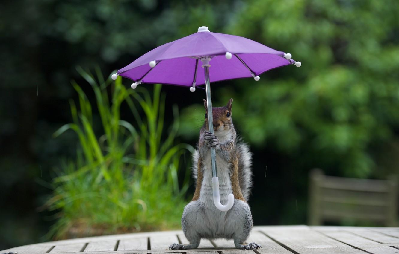 Синоптики ответили, придут ли дожди вместе с прохладой в Тверскую область