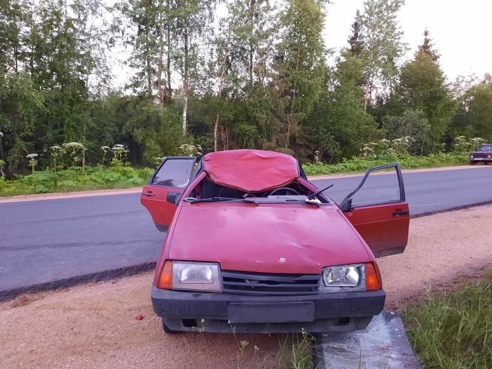 Лось погиб под колёсами машины в Тверской области, две женщины пострадали