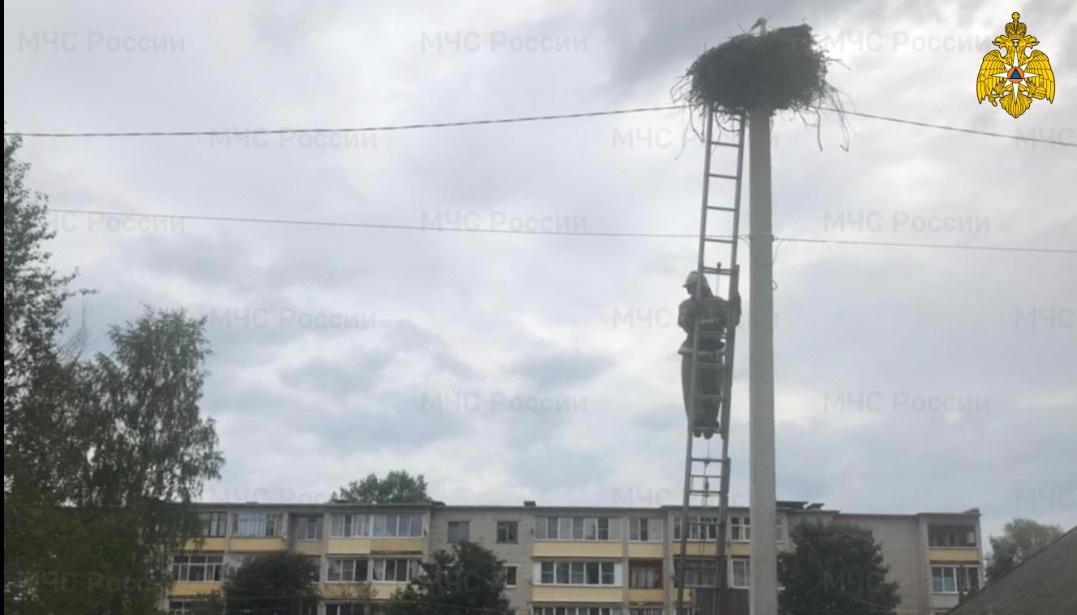 Пожарные спасли трёх маленьких аистят в Тверской области