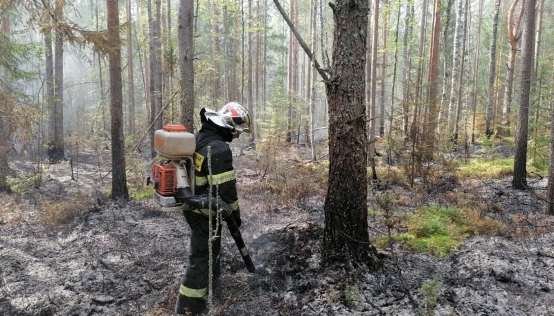 В Тверской области загорелся лес