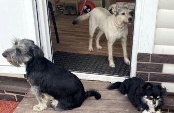 4 приюта для безнадзорных животных создадут в Тверской области до конца года