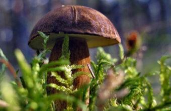 Москвичи ищут грибы в Тверской области, хотя у нас их нет