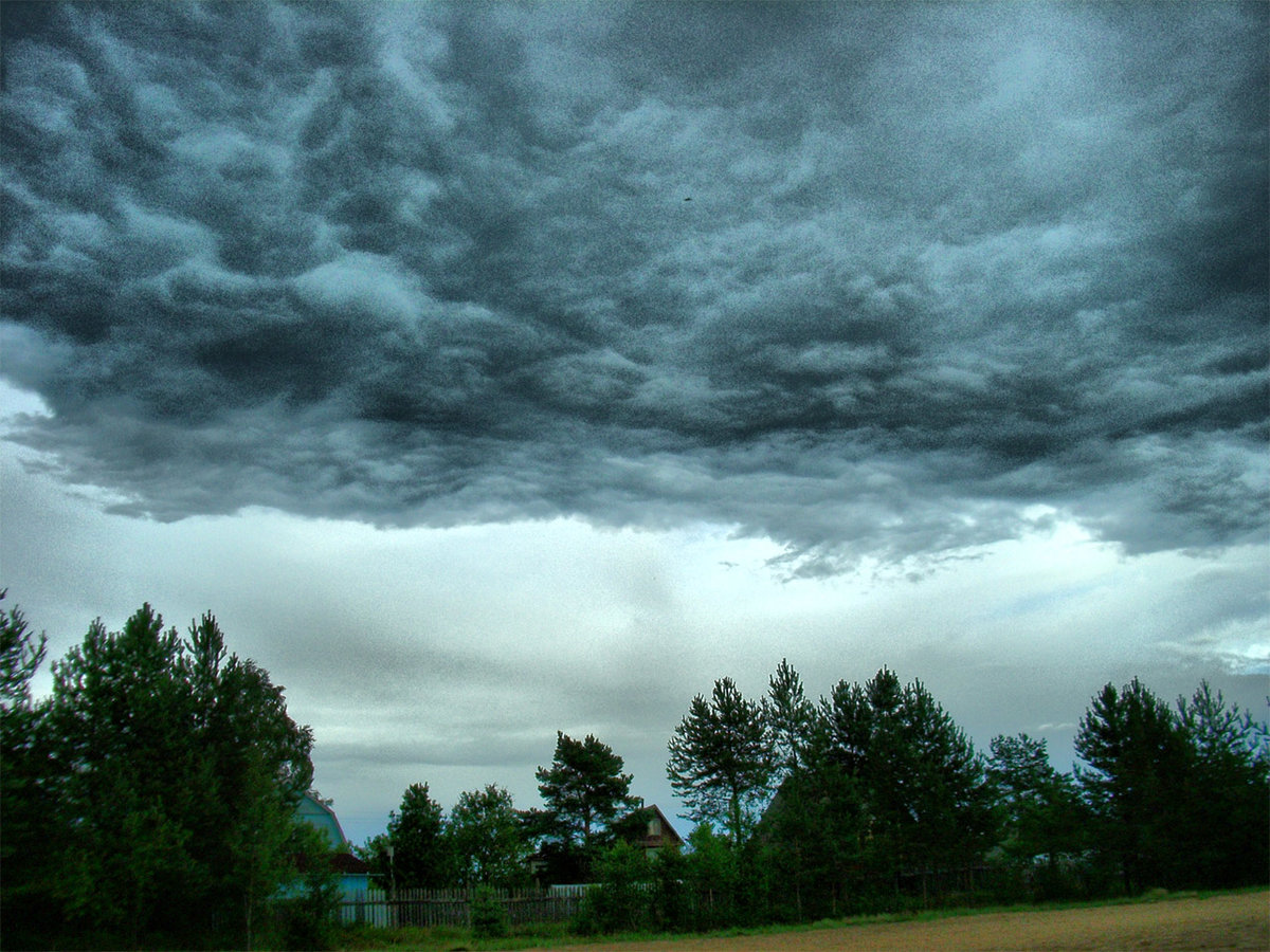 Дожди уходят: прогноз на первую неделю августа в Тверской области