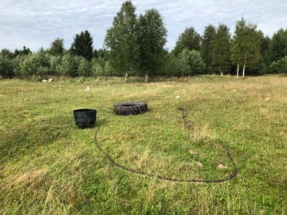 В Тверской области бык насмерть забодал мужчину