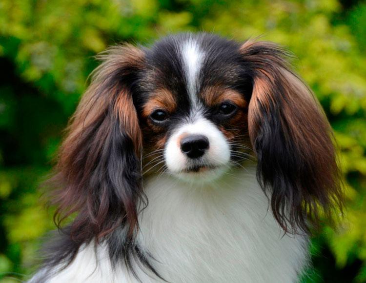 Жительница Твери хотела купить щенка, но попала в руки мошенника