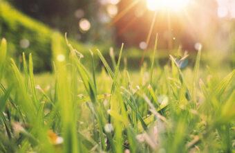 После первых заморозков в Тверскую область возвращается лето