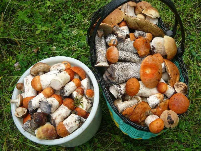 Жители Тверской области носят грибы из леса вёдрами