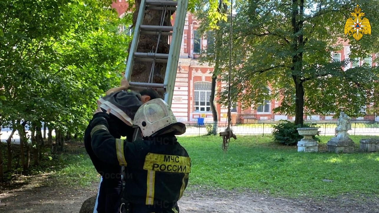 Тверские спасатели пришли на помощь ребёнку, застрявшему на дереве
