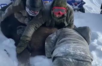 Жители Тверской области, которые зверски убили лосиху, предстанут перед судом