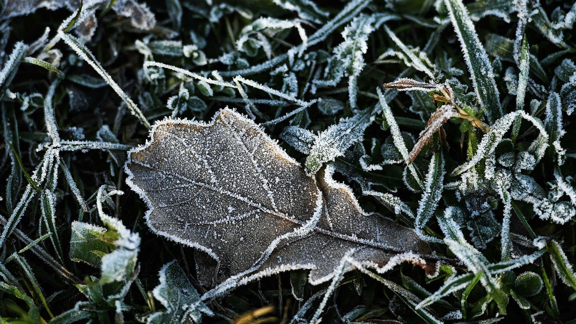 На Тверскую область надвигаются заморозки