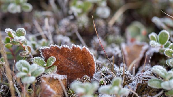 Будьте осторожны: на Тверскую область надвигаются заморозки